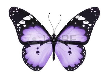 Testing my Butterflies